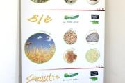 cereales-quel-regal